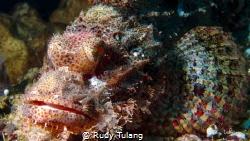 pinky rock fish by Rudy Tulang