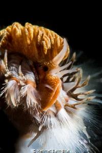 Fire worm. by Mehmet Salih Bilal