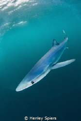 Cornish Blue by Henley Spiers