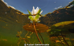 Part of a project I'm working on flowers in the Everglades by Russell Satterthwaite