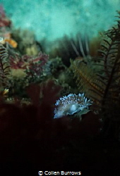 Nudi in the foliage by Collen Burrows