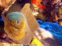 Olumpus E-PM1 - Aruba by Juan Keyter