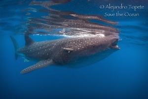 King of the Sea, Isla Contoy México by Alejandro Topete