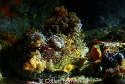 Disk World - family of nudibranches hitching a ride on an... by Collen Burrows