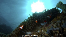 sunbathing nemo by Rudy Tulang