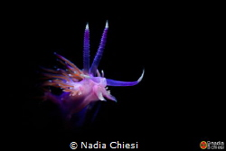 This shoot is take by Grotta Byron dive site in Porto Ven... by Nadia Chiesi