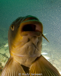 Carp.........Smiling at us by Rudy Janssen