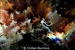 You know you're special, when you have a rainbow shining ... by Collen Burrows