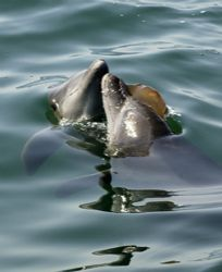 This image was taken when a couple of dolphins were playi... by Eduardo Lugo
