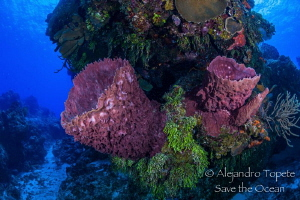 Sponges in Paradise, Cozumel México by Alejandro Topete