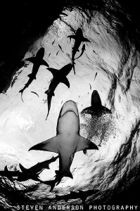 Views  from the bottom looking up at the surface always g... by Steven Anderson