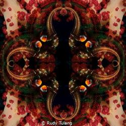clownfish hiding at softcoral by Rudy Tulang