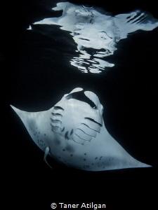 Manta reflection (night snorkeling) by Taner Atilgan