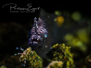 Frogeye in the spotlight by Philippe Eggert
