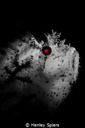 Terminator by Henley Spiers