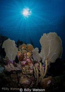 Lovely first dive of the day! by Billy Watson