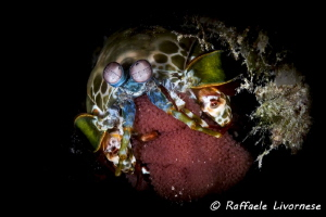 Manthis shrimp with eggs by Raffaele Livornese