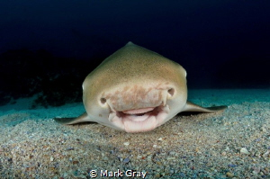 The smiling Leopard shark by Mark Gray