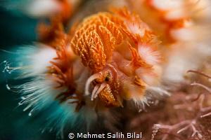 Fireworm. by Mehmet Salih Bilal