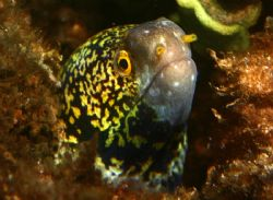 Whos There? Taken in Waialua, HI. This eel wasn't very la... by Mathew Cook