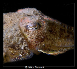 Cuttle fish eye by Niky Šímová