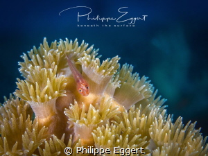 Goby hills by Philippe Eggert