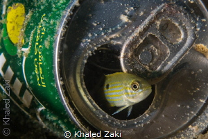 Fish at Home by Khaled Zaki