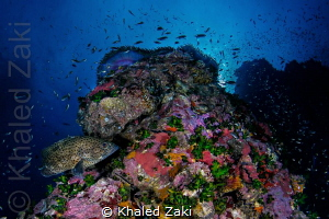 Living Reef by Khaled Zaki