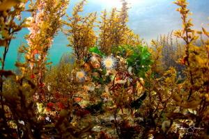 Underwater landscape, Lake Grevelingen, Zeeland, The Neth... by Filip Staes