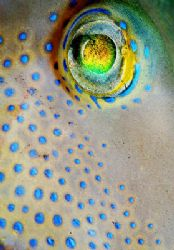 What a wonderful eye! This is a full frame close-up of th... by Arthur Telle Thiemann