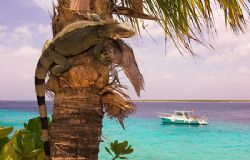This was actually taken in Bonaire but that isn's on the ... by Rand Mcmeins