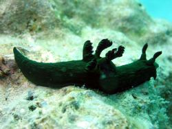Taken at Mabul Island, East Malaysia by Dennis Siau