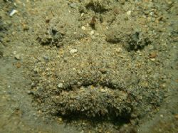 Face in the sand. Ended up being a huge stone fish. Olymp... by Brad Cox