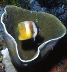 Fishbowl. by David Spiel