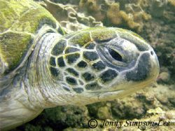 Shot in early May 2006 using a Sea&Sea DX-8000G. Muscat -... by Jonny Simpson-Lee