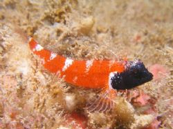 I dont know what sort of fish this is, it has some simila... by Damien Preston