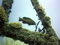 This was taken July 2003 at Roatan with a Caplio RR 30. by Bonnie Conley