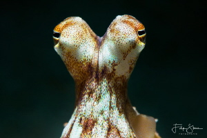 """""""I've got my eyes on you"""", Puerto Galera, The Philippines. by Filip Staes"""