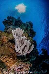 Living reef Sunbeam by Khaled Zaki