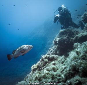 diving in Ustica by Antonio Venturelli