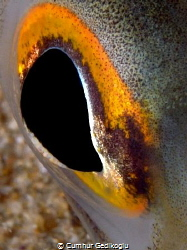 Ariosoma balearicum eye by Cumhur Gedikoglu