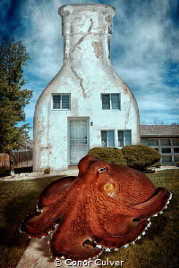 """""""Coconut Octopus House"""" the coconut octopus often uses bo... by Conor Culver"""