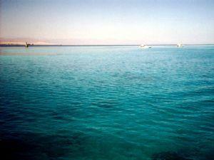 Tiran Reefs, Sharm el Sheikh by Riccardo Colaiori
