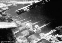Wreck of the Kingston at Shag Rock, northern Red Sea. Sho... by Jonny Simpson-Lee