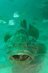 Close up Cod Quobba Coastline West Aust Olympus 7070 by Brad Cox