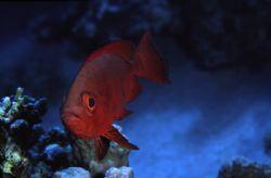 red sea Dahab, 2006 by Ran Marom