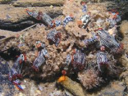"""""""Nudi Ball"""" On one the first dives on the 1 Mile Jetty in... by Damien Preston"""