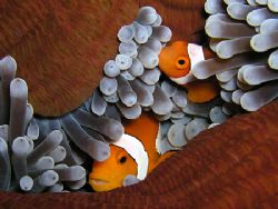 Like two peas in a pod. Taken in Com with an Olympus C5050. by Nick Hobgood
