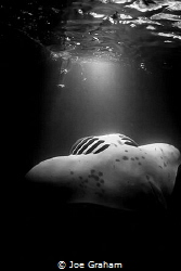Spaceship! Manta passing by on Night dive under the boat by Joe Graham