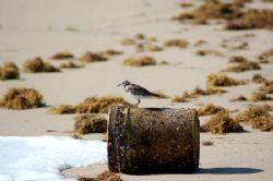 Boynton beach fl. by Joanne Fraser